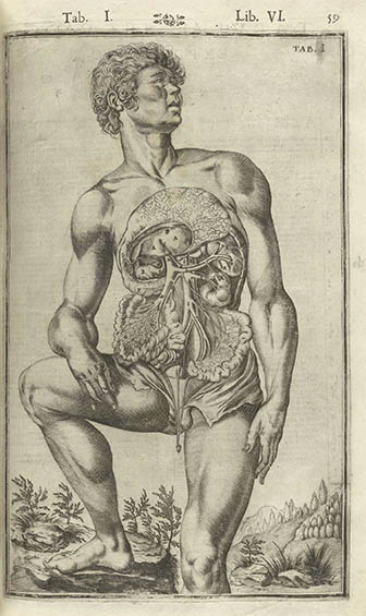 Tabulae Anatomicae, click for larger image