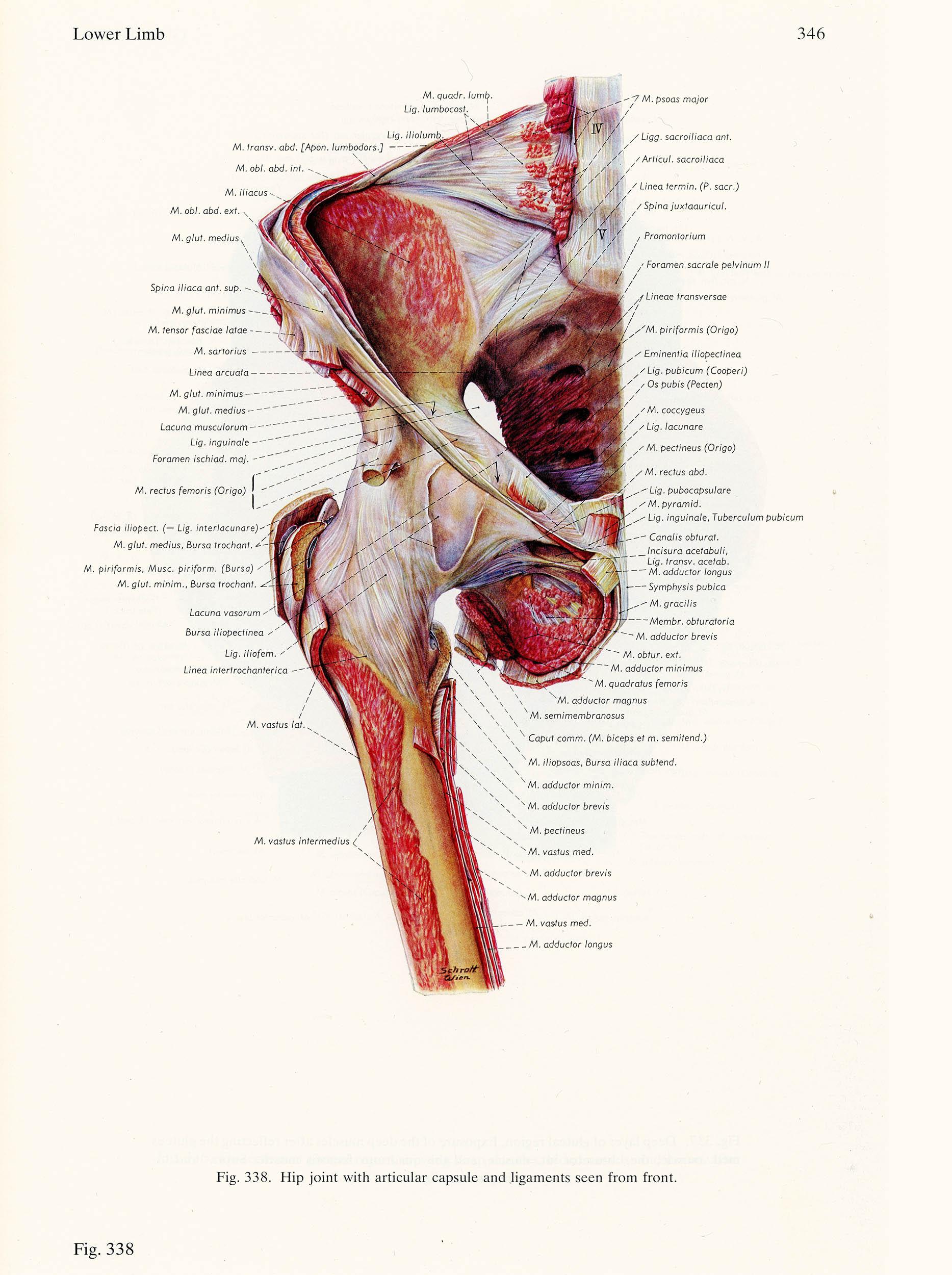 Des anatomie pdf der atlas menschen