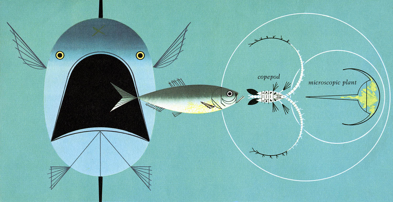 Brilliant mistake charley harper food chain for Charley s fishing