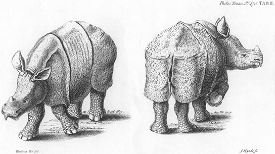 Rhinoceros, click for larger image