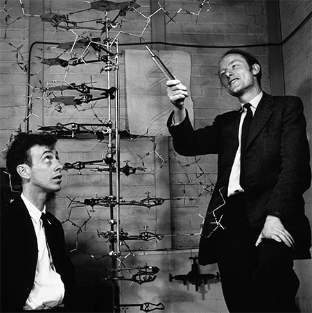 Watson and Crick, 1953,, click for larger image